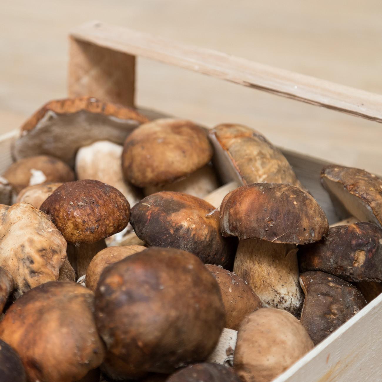 Funghi porcini in Toscana